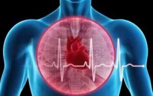В жару необходимо защитить сердечно-сосудистую систему